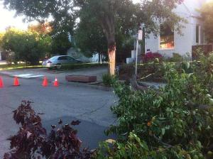 A block of Maple Avenue in the Laurel District was completely closed Wednesday morning due to a downed tree