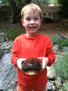 Western pond turtle.