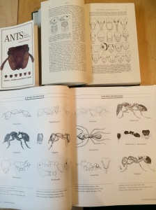 We've got some wonderful ant books. But even that ain't enough for an easy ID.