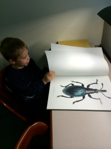 One of the oversize books on beetles.