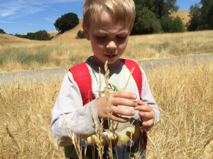 Kieran has sharp eyes, and spots many insects in the tall, dry grass.