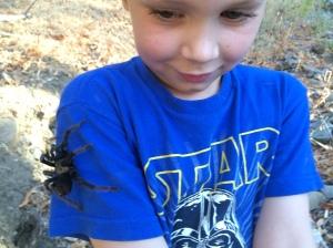Tarantula climb