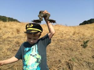Rana catesbeiana is a heavy frog, too!