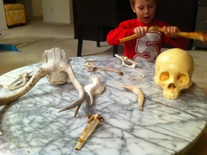 Kieran has a replica human skull, too, that he got for Christmas.