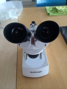 Our microscope, a binocular dissection instrument, is not good enough to see tiny details on tiny ants!