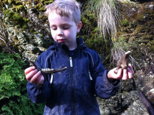 He found this deer mandible himself in a dry Mt. Diablo creek bed.