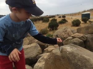 Kieran carefully set the first lizard on a rock to release it.