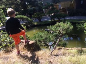 Kieran scouts the pond for the turtle.