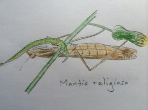Mantis mama