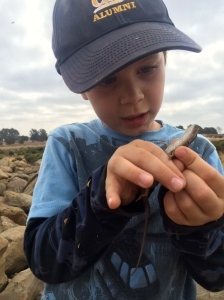Kieran carefully studied the first alligator lizard we caught.
