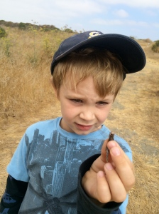 Kieran held the dragonfly carefully before setting it free.
