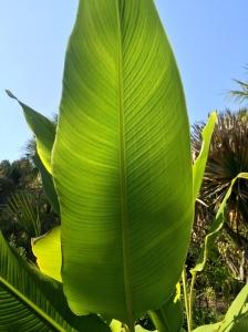 Sunlit leaf