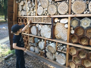 Oakland's bee hotel uses wood of all types and nesting spaces of many diameters. Some spaces are packed with sawdust, and there are even some paper drinking straws for use as nest tubes!