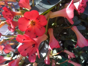Pink blooms 1