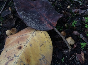Many tiny mushrooms
