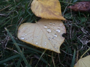 Overnight rain spangled the world with tiny silver droplets.