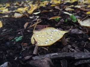 Yellow leaf with drops