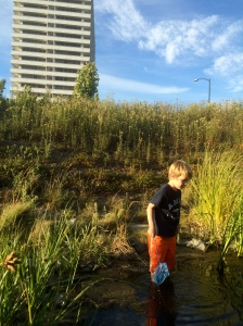 In dry summer months, the ponds are tiny.