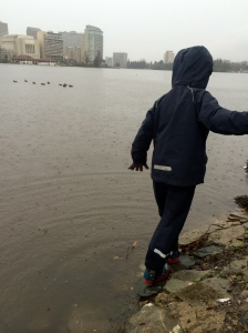 Wading in the lake, which is at a very high flood stage.