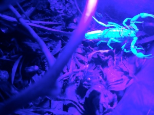 No matter where they hide in the vegetation, the UV light finds them!