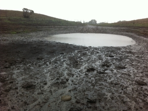 A year ago in February, both ponds were dwindled by drought to mere puddles.