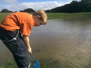 Kieran used a small fish tank net to catch creatures in the water.