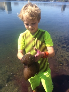 You might find a sea hare. Good thing the ink doesn't stain skin or clothes!