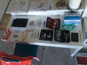 We spread out all our dissecting equipment, and opened some old anatomy books to the diagrams of the human brain.