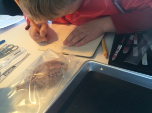 Kieran sketched the brain, noting some of its parts.