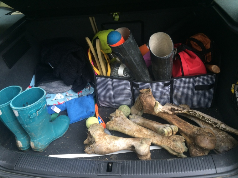 Trunk full of bones