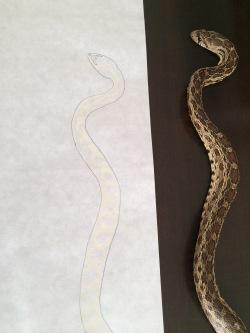 Snake white pattern