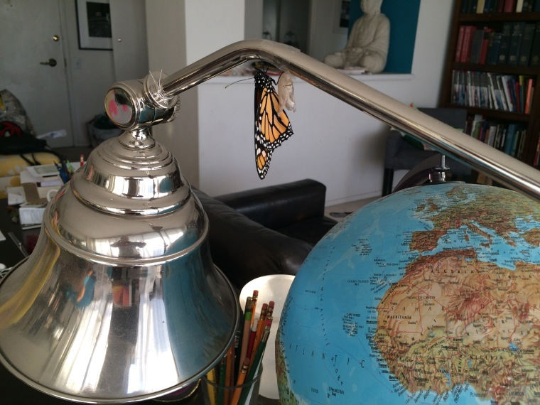 Monarch on lamp